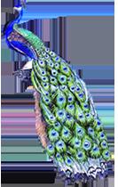 peacock_left